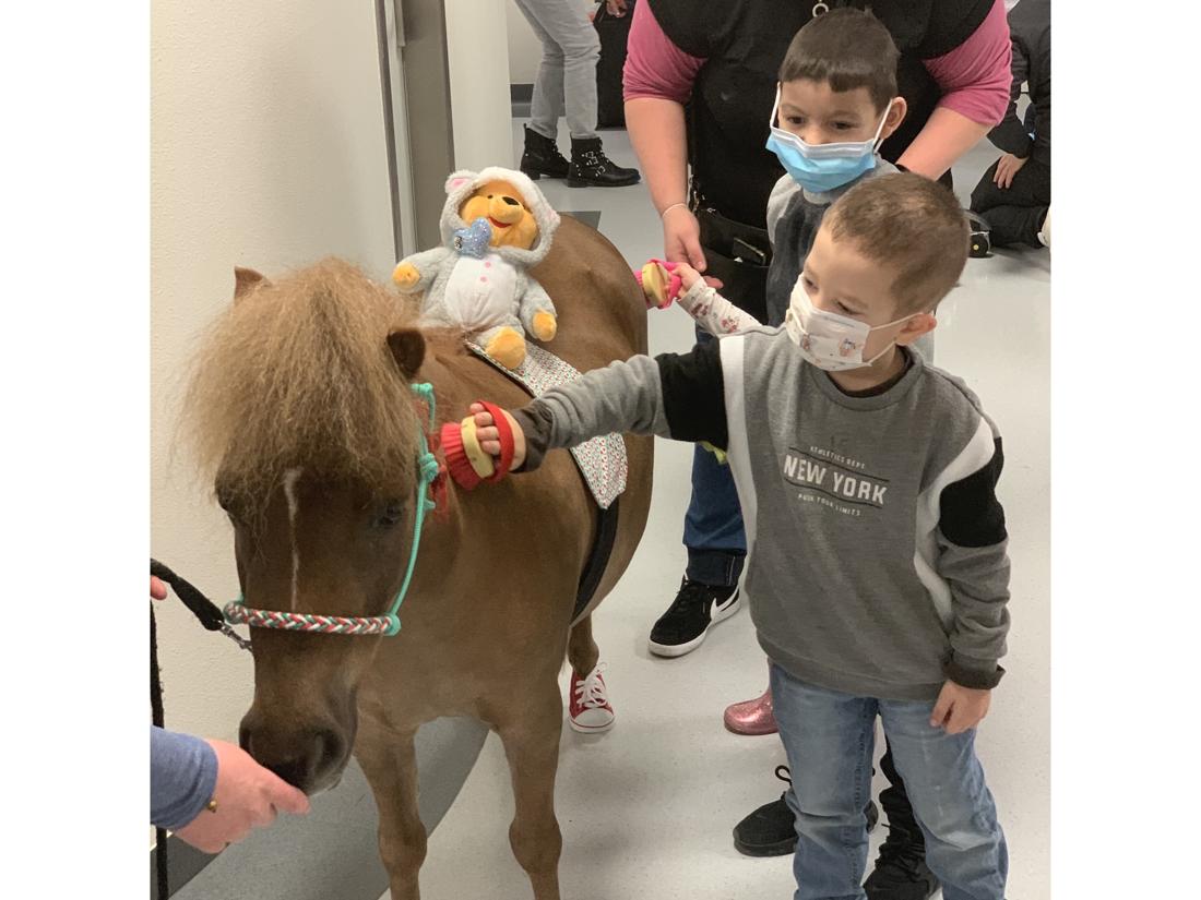"""Minipaarden met schoenen vrolijken patiëntjes op in UZA: """"Onze dieren hebben een therapeutisch effect op de kinderen"""""""