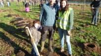 Willebroek wil tegen 2025 10.500 nieuwe bomen planten