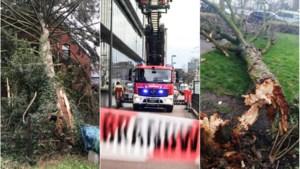 LIVE. Storm Dennis: veel oproepen voor schade, rukwinden tot 108 km/u in Stabroek