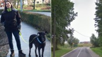 """Drie honden gedood met bijzonder zwaar vergif: """"Amper 10 minuten tussen eerste symptomen en overlijden"""""""