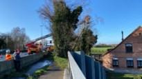 Twee rijstroken afgesloten op E313 om afgebroken boom te verwijderen