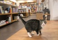 Renée is de nieuwe kat van boekhandel Salvator