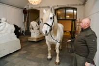 Er staat een paard -en nog veel meer- in de gang van de Academie