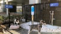 Luchthaven van Osaka opent luxueus toilet … voor honden