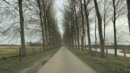 Doel 2020 vreest voor kap van honderden populieren in Verrebroek