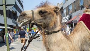 Neusgaten van kamelen of termietenheuvels: kunnen we de natuur na-apen om de natuur te redden?
