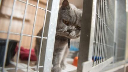 Mechelen zet verder in op sterilisatie van katten