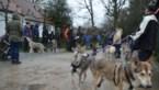 Wolvenwandeling in Zoerselbos wordt wel heel letterlijk genomen