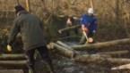 Vrijwilligers Natuurpunt ruimen Broek op na doortocht Ciara en Dennis