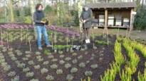 De Kleine Boerderij in Merksplas legt botanische tuin met 4.400 heideplanten aan