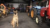 Inbrekers stelen voor duizenden euro's materiaal bij tuinbouwmachines Baeyens