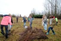 """Deze gemeenten engageren zich om bomen te planten: """"Inwoners sensibiliseren over het belang van bomen"""""""