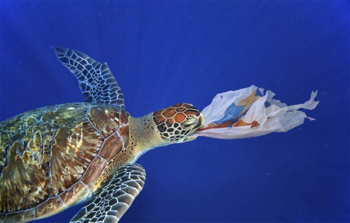 Plastiek ruikt te lekker voor zeedieren