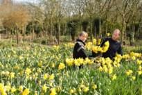 Bloemenbos schenkt wzc's honderden paasbloemen