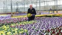 Bloementeler ziet 200.000 viooltjes, primula's en madeliefjes in container verdwijnen (maar zoekt positief alternatief)