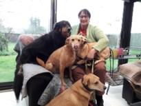 """Coronacrisis houdt adoptiehonden tegen aan de grens: """"Baasjes moeten wachten"""""""