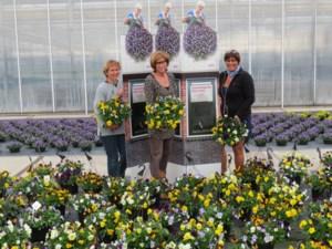 """Plantengroothandel blijft zitten met 150.000 viooltjes: """"Eerst het slechte weer en nu corona, dit is een ramp"""""""
