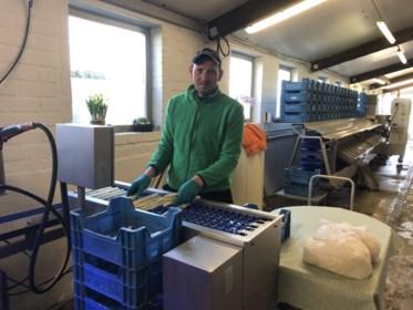 Eerste asperges in de winkel, prijs maakt bokkensprongen door coronacrisis