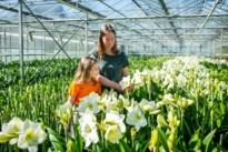 Leven en werken in tijden van corona: bloemkwekerijen zien topmaand mei in het water vallen