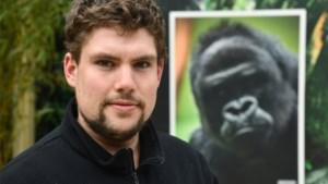 """Ook zonder bezoekers blijft de Zoo draaien: """"Gorilla's weten goed dat er iets niet in de haak zit"""""""