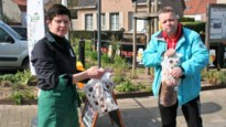 Nederlandse inwoners van Koewacht mogen geen boodschappen doen op Belgische bodem
