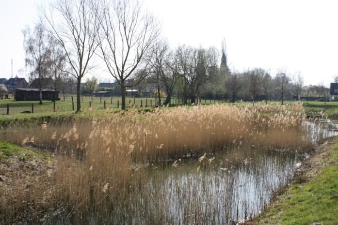 Landschapspark Frijthout wordt stukje groter: Kempens Landschap koopt aanpalend perceel van 1,5 hectare