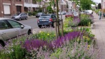 Tweehonderd Antwerpse boomspiegels worden 'boomtuinen'