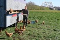 """Jonge bioboer Wannes strijkt neer in de Werve Hoef: """"Nog dit voorjaar haal ik m'n eerste oogst binnen"""""""