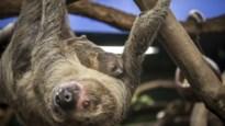 Lessen van een luiaard: 10 tips om beter te leren niksen
