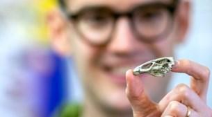 Fossiel schedeltje van Limburgse wonderkip zet evolutie vogels op zijn kop