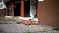 Coronavirus teistert ook Ecuador: overledenen liggen dagen op straat voor autoriteiten ze ophalen