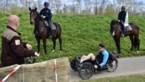 Paardenpatrouille houdt toezicht op wandelaars en fietsers