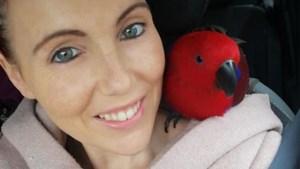 """Baasje roept onbekende vinder op haar papegaai terug te brengen: """"Zonder Flavie is er een leegte in ons huis"""""""