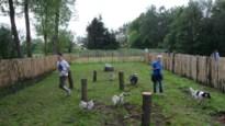 Drie extra losloopzones voor honden in Herenthout, Herentals en Balen