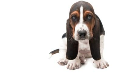 Drie extra losloopzones voor honden
