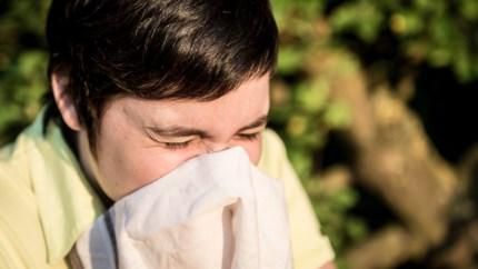 Slecht nieuws voor wie allergisch is: berkenpollen houden door droog weer lelijk huis