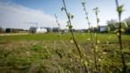 """Nieuw plan houdt Spreeuwenhoek groener: """"Het bos staat er nog, dat is al positief"""""""