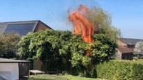Bamboe vat vuur in Minderhout