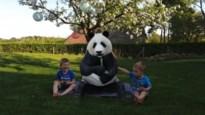 GETEST. Picknick met een panda of poseren met een tijger? Dankzij Google kan het
