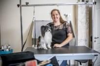 """Trimsalons voor huisdieren mogen maandag weer open: """"Ingegroeide nagels en haarklitten zijn gevaarlijk"""""""