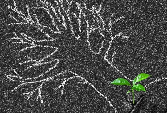 Botanisch stoepkrijten, wordt dit een nieuwe trend?