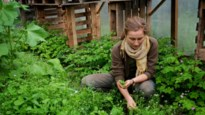 Superfoods uit eigen tuin: Marjolein vzw promoot eetbare tuinen
