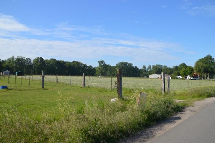 Zandhoven krijgt er bos met bijna 2.000 bomen bij