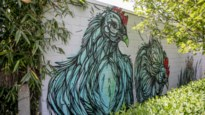 De 5 om te beleven: streetart in de Kempen
