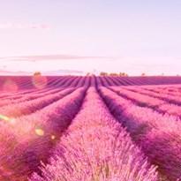 De geur van de Provence en de flair van aan de Côte d'Azur: zo haal je la douce France binnen