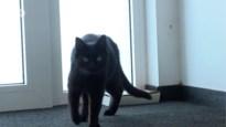 Vermiste kat Noah na twee jaar (!) weer thuis in Sint-Job