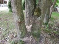 Nieuwe klap voor De Liereman: onbekenden zagen maar liefst 117 bomen in