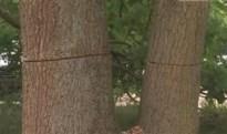 """Vandaal vernielt bomen in De Liereman: """"Dit is een aanslag op het gebied"""""""