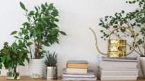 Plantenliefhebster op TikTok levert eerste hulp bij het verzorgen van je kamerplanten