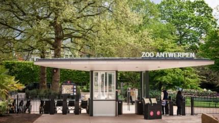 Brandmelding in Zoo Antwerpen, incident blijft gelukkig beperkt